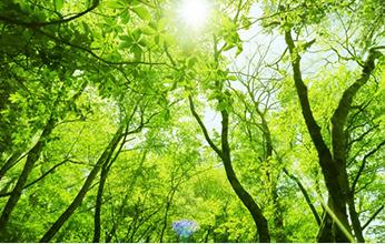 森林認証制度とは?